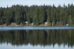 Altijdgroene die bomen in water worden weerspiegeld Stock Foto