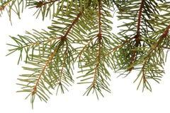 Altijdgroene Kerstboom royalty-vrije stock foto's
