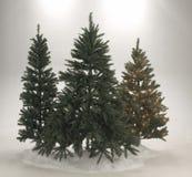 Altijdgroene Kerstmisbomen Stock Afbeelding