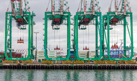 Altijdgroene Marine Corporation Container Cranes bij Haven van Los ANG Stock Afbeeldingen