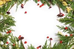 Altijdgroene sparrendecoratie voor geïsoleerde Kerstmiskaart Stock Foto