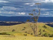 Altipiani australiani della centrale del paesaggio Fotografia Stock