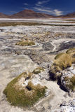 Altiplanic Lagoon - Atacama Desert - Chile Royalty Free Stock Photography