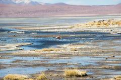 Altiplanicas de Lagunas fotos de archivo libres de regalías