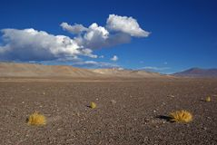 Altiplano #1 Royalty Free Stock Photo