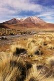 Altiplano Imagenes de archivo
