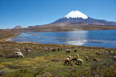 Altiplano Royalty Free Stock Photo