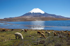 Altiplano Stock Images