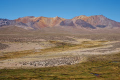 Altiplano Royalty Free Stock Photo