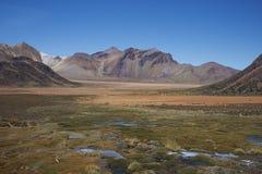 Altiplano av nordliga Chile Arkivbilder