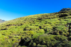 Altiplano berggrönska Royaltyfria Foton
