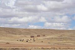 Altiplano, Bolivia Immagini Stock Libere da Diritti
