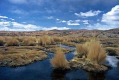 Altiplano in Bolivia,Bolivia. Pampas Grass in a pond at Eduardo Avaroa National Reserve,Bolivia Stock Images
