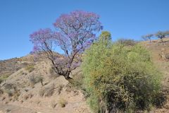 The Altiplano. Bolivia Royalty Free Stock Photos
