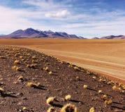 Altiplano Stock Photos