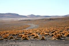 Altiplano boliviano Immagine Stock