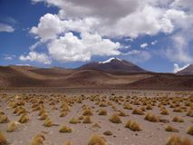Altiplano de Bolivia Arkivfoto