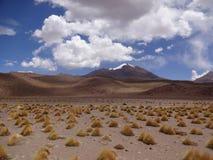 Altiplano de Boliwia Zdjęcie Stock