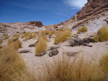 Altiplano desert with colorful rock formations Stock Images