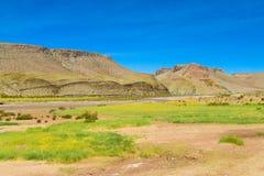 Altiplano färgrikt landskap Royaltyfri Bild