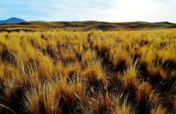 The Altiplano. The high plains of Peru are at an elevation of 12,000+ feet and are full of lush grasses Royalty Free Stock Images
