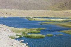 Altiplano inondato del paesaggio nel Perù Immagine Stock