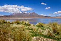 Altiplano laguna in sud Lipez reserva, Bolivia Royalty Free Stock Images