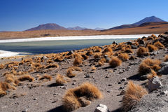 Altiplano landscape Royalty Free Stock Photography