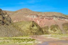 Altiplano landscape Royalty Free Stock Photography