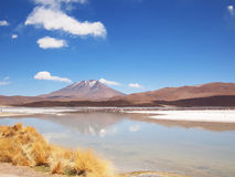 Altiplano landscape with a lake in front of a volcano Stock Images