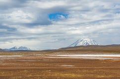 Altiplano landskap och Misti Volcano, Peru arkivfoton