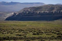 Altiplano peruano con alpaca Imagen de archivo libre de regalías