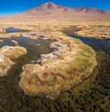 Altiplano swamp Stock Photos