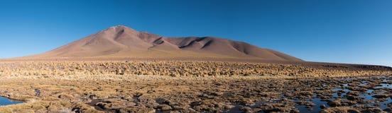 Altiplano swamp Royalty Free Stock Photo