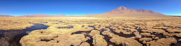 Altiplano träsk Royaltyfri Bild