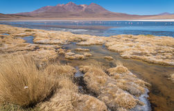Altiplano träsk Arkivfoto