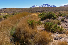 Altitude Desert View. Desert view showing typical altitude vegetation and background mountains Royalty Free Stock Image