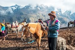 Altitude service in Peru. VINICUNCA, PERU- OCTOBER 29: mountain guide in traditional wear holds red mule at high altitude grounds in Vinicunca, Peru on October stock image