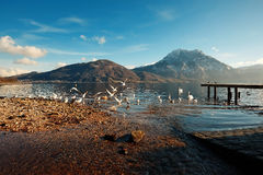 Altmà ¼ nster ptaków moutains jeziora most Fotografia Royalty Free