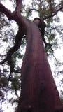 Alto árbol Imagen de archivo libre de regalías