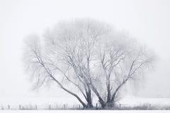 Alto árbol dominante del invierno Fotografía de archivo