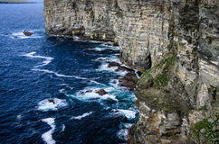 Alto acantilado en las islas de las Orcadas (cabeza del marwick), nido del SE Imagenes de archivo