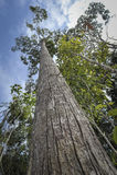 Alto albero Fotografie Stock Libere da Diritti
