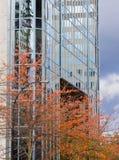 Alto aumento ed alberi Fotografie Stock