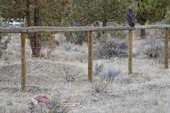 Alto avvoltoio di Turchia del deserto fotografie stock