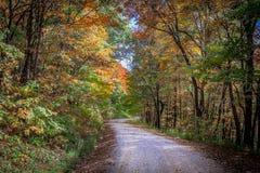 Alto botón en otoño Imagenes de archivo