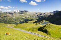 Alto camino alpestre Foto de archivo libre de regalías