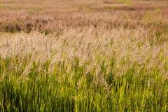 Alto campo de hierba verde foto de archivo