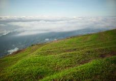 Alto campo verde Imagen de archivo