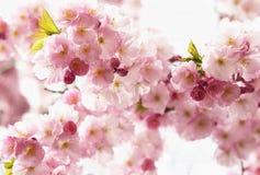 Alto-chave cor-de-rosa da flor fotos de stock
